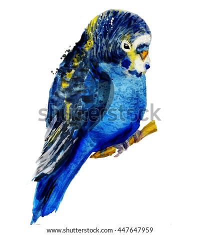 Watercolour parrot. budgerigar