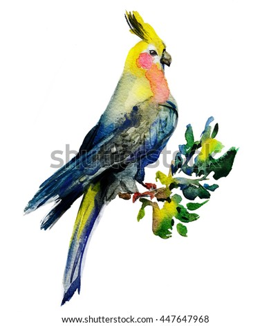 Watercolour parrot Corella