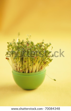 Watercress growing in green pot on yellow background