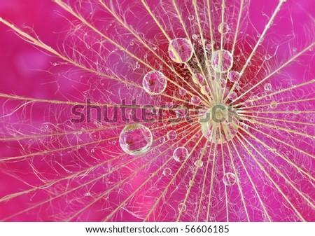 Waterdrop reflection on dandelion seed - extreme macro - stock photo