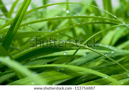 waterdrops on green grass