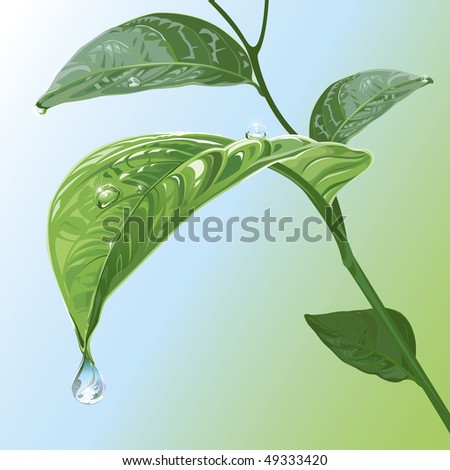 Waterdrops On Leaves, raster version