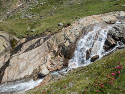 waterfall cascade at wild Freigerbach stream with rocks, green meadow and blooming alpenrose, Rhododendron ferrugineum. Tyrol, Stubai Alps, Austria