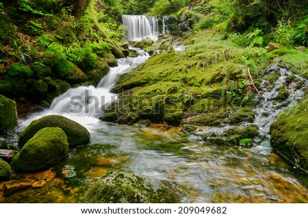 Waterfall in moss and ferns. Giant mountains, Czech republic