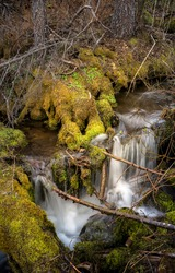 Waterfall on mossy rocks in the forest. River stream in mossy trees. Forest moss stream. Green moss stream