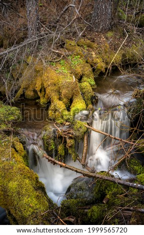 Waterfall on mossy rocks in the forest. River stream in mossy trees. Forest moss stream. Green moss stream Сток-фото ©