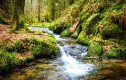Waterfall river stream in green nature forest landscape