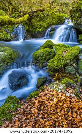 Waterfall stream on mossy stones. Mossy rocks water flow. Stream on mossy rocks. Autumn cold creek in green moss