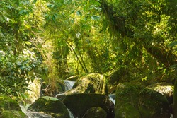 Waterfall with mossy rocks in the atlantic forest