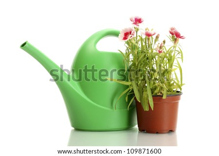 watering can and plant in flowerpot isolated on white