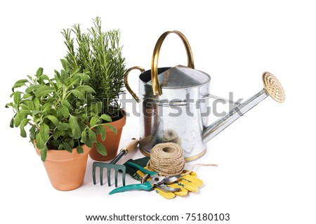 Watering can with fresh herbs and gardening tools isolated