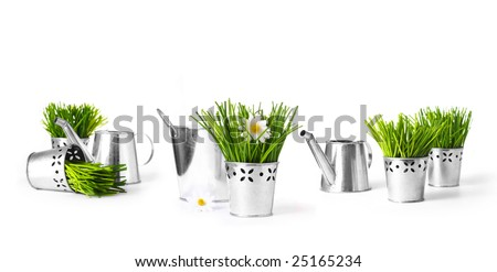 Watering can with grass and spring garden flowers on white