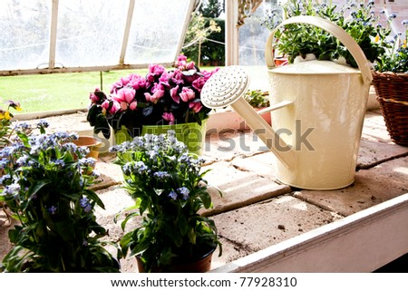 Watering cans, concept of gardening and hobby