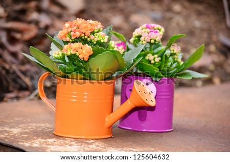 watering cans with colorful  flowers