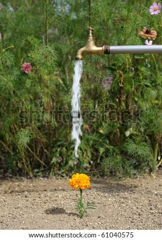 watering flowers in garden