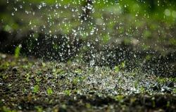 Watering garden background. Rain drops falling on spring wet flowerbed soil. Sprinkled water mist