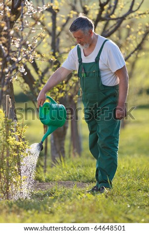 watering orchard/garden - portrait of a senior man gardening in his garden (color toned image) - stock photo