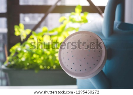 Watering pot with basil trees in background. This picture is suitable for such concept as houseplant, condo gardening, kitchen garden, balcony gardening, fresh vegetable, minimalism, organic veggie.