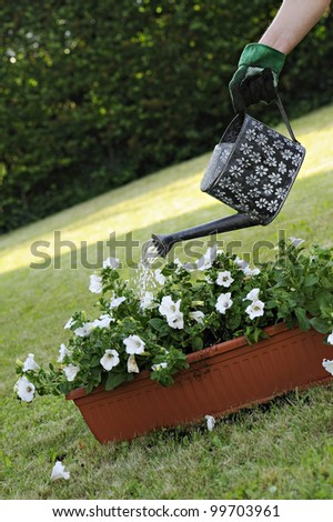 watering pot with flowers
