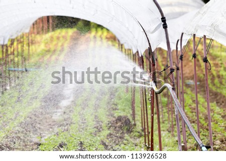 watering seedlings in a greenhouse
