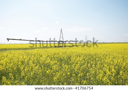 watering the field, the field of rapeseed