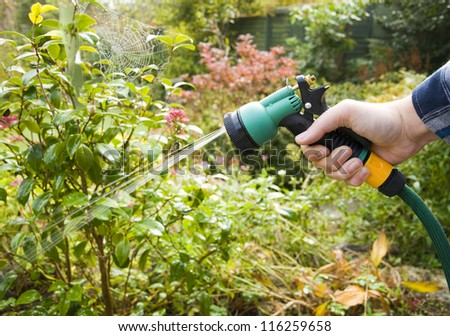 watering the garden, man using hose pipe with spray head