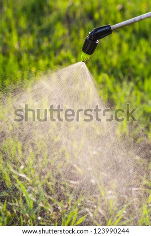 watering the lawn with a hand sprayer