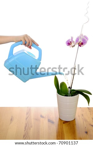 Watering the orchid