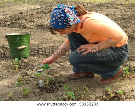 watering young strawberry plant
