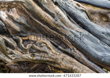 Waterlogged Driftwood
