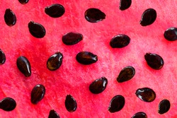 Watermelon Background. Red texture of Watermelon fruit with black seeds close up.