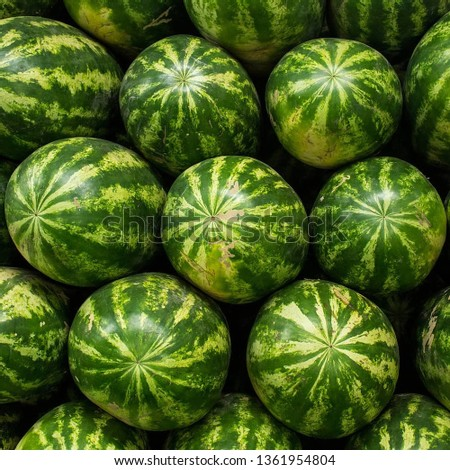 watermelon slice.Many big sweet green watermelons and one cut watermelon