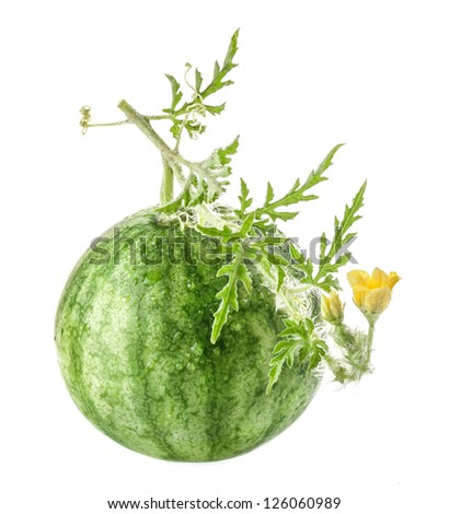 Watermelon with flowers isolated on white background