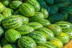 Watermelons on sale in the Jean-Talon Market Market, Little Italy district, Montreal, Quebec, Canada