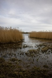 Waterways and marshland with long grass at the nature reserve in Calvert