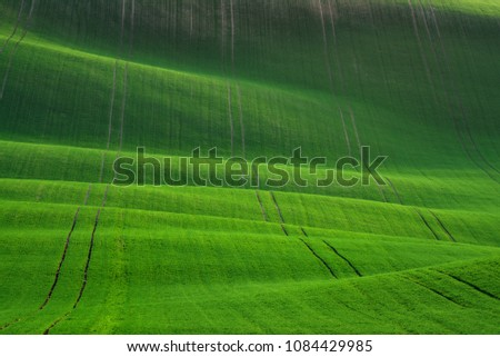 Waved Wheat Field.Green Spring Undulating Fields Of Crops That Resemble Corduroy With Lines Stretching Into Distance.Green Texture. Summer  Landscape In Green Colors. Great Green Spring Background