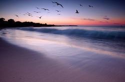Waves crashing on beach at sunset with birds flying by