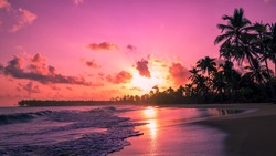 Waves on the sand of a beautiful wild tropical beach. Silhouettes of palm trees on the background of purple sunset