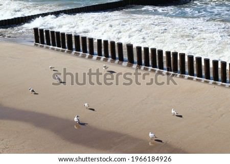 Waves roll onto a sandy beach with wooden breakwaters. There are no people on the beach, only birds are sitting. ストックフォト ©