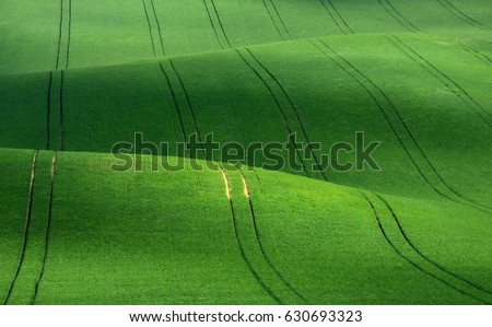 Wavy green wheat field with stripes and wavy abstract landscape pattern. Corduroy summer rural landscape in green tones. Green moravian undulating fields of crops. Green Spring Background texture.