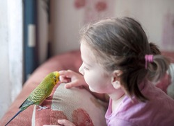 Wavy parrot (Melopsittacus undulatus) on the pillow. Parrot next to a little girl. The yellow green parrot
