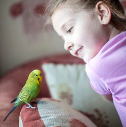 Wavy parrot on the pillow. Parrot next to a little girl. The yellow green parrot.