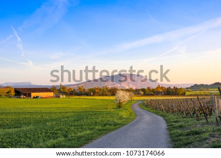 Way through the fields in the spring at sunset #1073174066