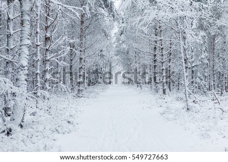 Way through the forest filled with tracks in the snow