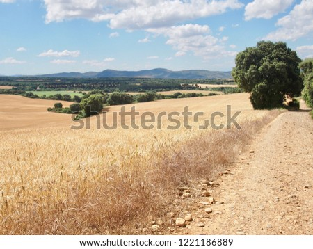 way with the wheat fields on French Way- Camino de Santiago (Spain) a daily picture