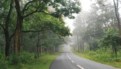 wayanad best road through forest