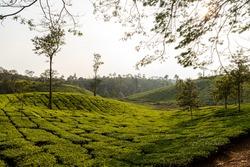 wayanad meen mutti coffee plantation and Beautiful Nature Scenery of Wayanad,kerala