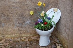WC toilet with flowers growing inside in a cortyard of stones, gardening idea
