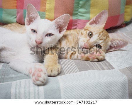 we are couple cat on the bed,relax time
