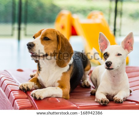 We are funny dog, waiting to play with you